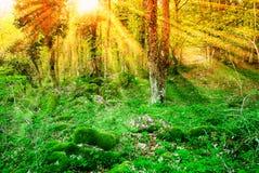Oranje hemel over de bomen Stock Fotografie