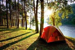 Oranje het kamperen tenten in het bos van de pijnboomboom door het meer Royalty-vrije Stock Foto