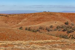 Oranje heuvels en schaars vegetatielandschap stock foto's