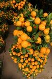 Oranje installatie Royalty-vrije Stock Foto's