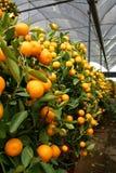 Oranje installatie Royalty-vrije Stock Fotografie
