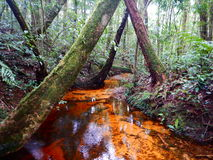 Oranje kanaal in het bos Royalty-vrije Stock Afbeeldingen