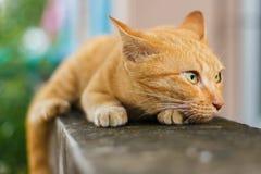 Oranje Kat royalty-vrije stock foto