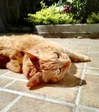 Oranje kat in bloemtuin stock foto's