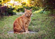 Oranje kat in de tuin stock foto