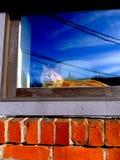 Oranje Kat in de vensterbank Royalty-vrije Stock Fotografie