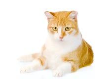Oranje kat die vooraan liggen Op witte achtergrond Royalty-vrije Stock Foto's