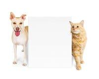 Oranje Kat en Hond achter Leeg Teken Royalty-vrije Stock Afbeeldingen