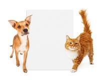 Oranje kat en hond met leeg teken Stock Afbeeldingen