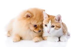 Oranje kat en spitz hond samen royalty-vrije stock afbeelding