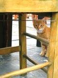 Oranje kat, gele frames Stock Foto's
