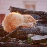Oranje kat op gebrande logboeken stock foto's
