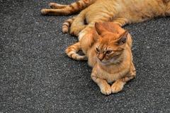Oranje Kat royalty-vrije stock fotografie