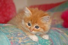 Oranje katje op bed Stock Afbeelding