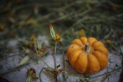 Oranje kleine pompoen royalty-vrije stock afbeeldingen