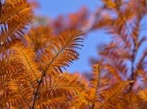 Oranje kleurenbladeren Stock Afbeeldingen