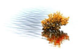 Oranje Kleurenboom Royalty-vrije Stock Foto's