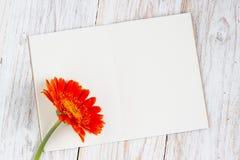 Oranje kleurrijke gerberabloemen Stock Afbeeldingen