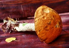 Oranje-kopboleet vers op de houten bank van het land stock foto