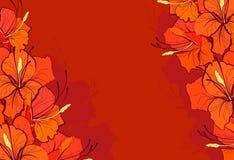Oranje lelies vector illustratie