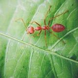 Oranje mier Stock Afbeeldingen