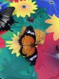 Oranje monarchvlinder Stock Afbeeldingen