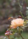 Oranje mooi nam toe Royalty-vrije Stock Afbeeldingen