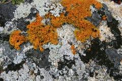 Oranje mos Stock Fotografie