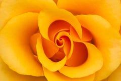 Oranje nam Bloem toe Royalty-vrije Stock Afbeelding