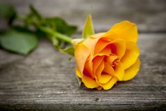 Oranje nam Bloem toe Royalty-vrije Stock Afbeeldingen
