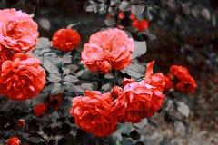 Oranje nam in de tuin toe royalty-vrije stock foto's