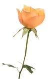 Oranje nam toe Stock Foto