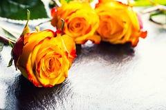 Oranje nam toe Geel nam toe Verscheidene oranje rozen op Granietachtergrond Royalty-vrije Stock Afbeeldingen