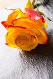 Oranje nam toe Geel nam toe Verscheidene oranje rozen op Granietachtergrond Royalty-vrije Stock Foto's