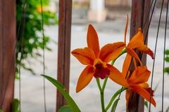 Oranje orchidee in de tuin stock fotografie