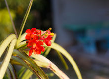 Oranje orchideebloem Royalty-vrije Stock Foto's