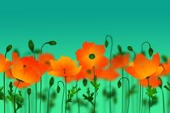 Oranje papavers Stock Afbeelding