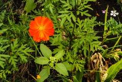 Oranje pastelkleurbloem Royalty-vrije Stock Foto