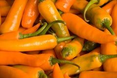 Oranje peper Stock Foto's