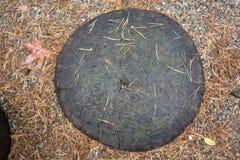 Oranje pijnboomnaalden op de donkere bruine bank van de boomboomstam Stock Foto's