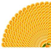 Oranje plakken die een grens maken Royalty-vrije Stock Foto