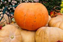 Oranje pompoen Royalty-vrije Stock Foto's