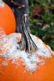 Oranje pompoenclose-up die sneeuw behandeld stamgebied tonen Stock Afbeelding