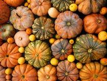 Oranje pompoenen Stock Foto