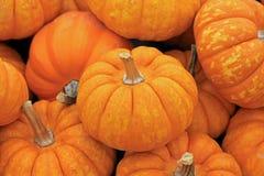 Oranje pompoenen Royalty-vrije Stock Foto's