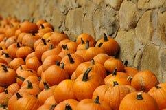 Oranje Pompoenen Stock Fotografie