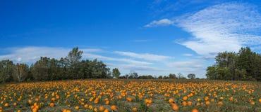 Oranje pompoenen bij openluchtlandbouwersmarkt stock afbeelding