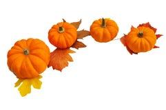 Oranje pompoenen die in een halve cirkel worden opgesteld Stock Foto's