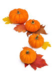 Oranje pompoenen die in een halve cirkel worden opgesteld Stock Foto