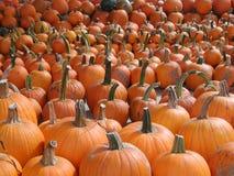 Oranje pompoenen die in rijen voor verkoop worden opgesteld royalty-vrije stock fotografie